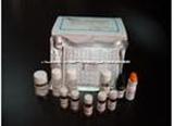 犬内皮素1(ET-1)酶联免疫(Elisa)试剂盒