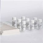 人血管紧张素Ⅱ(ANG-Ⅱ)ELISA试剂盒