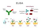 牛乙酰乙酸检测(ACAC)ELISA试剂盒