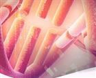 兔抗人无翅型MMTV整合位点家族成员9A(WNT9A)抗体