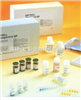 豚鼠晚期糖基化終末產物(AGEs)ELISA試劑盒